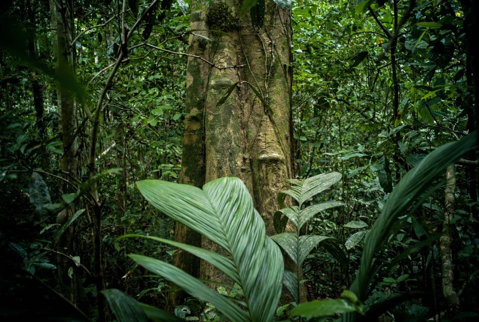 Ayahuasca Ceremonies Peru Jungle Amazon Tours Pucallpa Tourism Natural Medicine Plants Bushcraft Survival